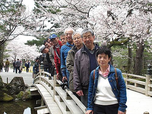 桜が満開の兼六園にて